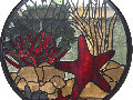red starfish window 2